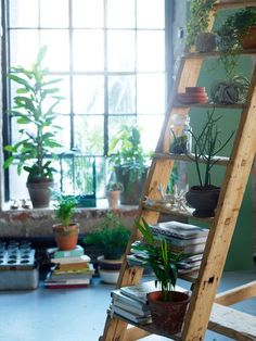 Repurposed ladders.. still a great and stylish way to display your plants.