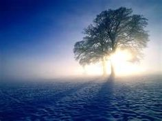 A cold winter morning mist upon two lonely trees somewhere in Arizona.