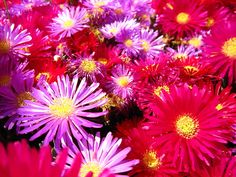 impossibly bright flowers