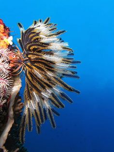 There is so much life below the ocean surface. See the beautiful and strange deep sea creatures that have been discovered underwater. Under The Water, Under The Sea, Feather Starfish, Sea Animals Drawings, Deep Sea Creatures, Most Beautiful Animals, Tier Fotos, Underwater World, Ocean Life