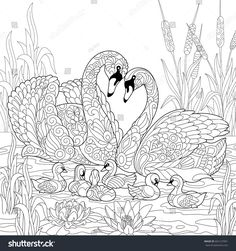 Coloring book page of swan birds family, lotus flowers and reed grass. Freehand sketch drawing for adult antistress colouring with doodle and zentangle elements.