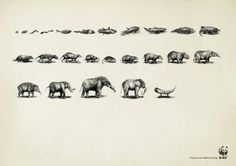 Striking-Ad-Campaigns-about-endangered-species-1