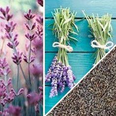 Raden Seeds | Garden Catalogs Online | Pinterest | Garden Catalogs, Seeds  And Gardens