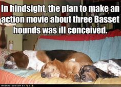 Basset Hounds are awesome! Check out this list of Basset Hound dog memes that are sure to put a smile on your face. Movie Happy, Basset Hound Funny, Basset Puppies, Funny Dogs, Funny Animals, Animal Funnies, Adorable Animals, Bassett Hound, Funny Dog Pictures