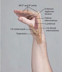 Leg Muscles Anatomy, Human Body Anatomy, Muscle Anatomy, Hand Therapy, Massage Therapy, Physical Therapy, Lymphatic Drainage Massage, Medical Anatomy, Muscle Body