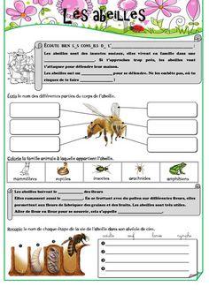Les petites bêtes du jardin - Fiches de préparations (cycle1-cycle 2-ULIS)