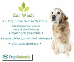 Dog ear wash...poor puppy has an ear infection!!