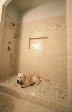 Beautiful built in dog shower. No more muddy paws!.....Must have!