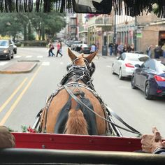 A Mule With A View! What a great way to discover the French Quarter in New Orleans! #carriage #carriagetour #frenchquarter #neworleans #Repost @greeneyedbandit112