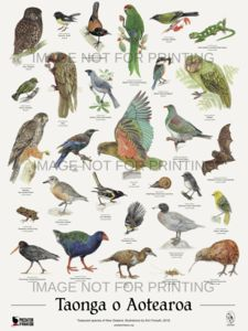 Check out the deal on Taonga o Aotearoa Poster at New Zealand Fine Prints New Zealand Tattoo, New Zealand Art, Crafts To Make And Sell, Crafts For Girls, New Zealand Wildlife, Maori Symbols, Fun Craft, Craft Ideas, Bird Identification