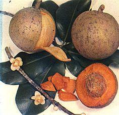 El mamey se cultiva más que nada por su fruta, la cual tiene una pulpa carnosa firme y de color anaranjado, cubierta por una cáscara correosa de color pardo. se identifica como Mammea americana L.