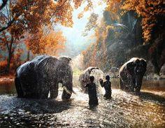 15 beautiful and majestic photos of elephants
