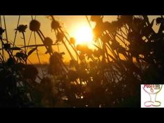 10 Minute Guided Meditation - The Power of Positivity - Positive Energy - YouTube