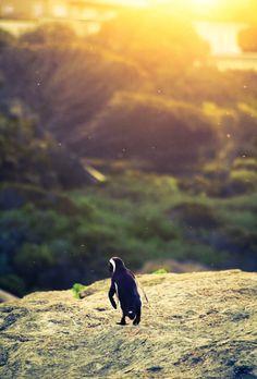"Nature Madness | ""Penguin Promenade"" by Marc Wegner"
