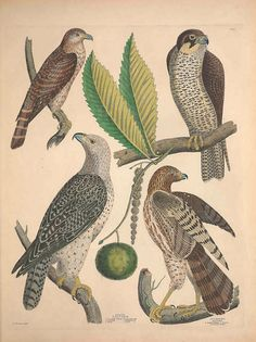 jomobimo:  Illustrations of the American ornithology of Alexander Wilson and Charles Lucian Bonaparte :1835..