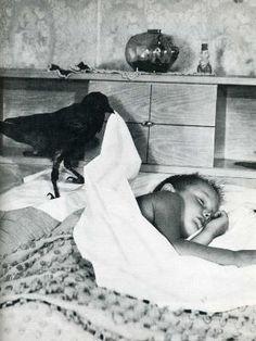 Life magazine - a crow putting a boy to sleep. The Crow, Life Magazine, Black White Photos, Black And White Photography, Photo Black, Vintage Photographs, Vintage Photos, Sleeping Boy, Jackdaw