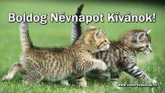 While looking for a safe place for your cats when you are out on a vacation, opt for cat boarding kennels by Sweetie Cat House. Clean, safe and hygienic, your cats will be kept with care and love here. Cute Baby Cats, Cute Kittens, Cats And Kittens, Funny Dogs, Funny Animals, Cute Animals, Hate Cats, Crazy Cats, Pretty Cats