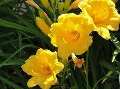 5 especies ideales para un jardín de bajo mantenimiento.