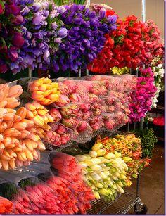 Tulips  http://lh3.ggpht.com/_t8-Y4w1UKrc/SRy39TIpc6I/AAAAAAAAO7g/JxnaFnpgSrU/image3_thumb.png