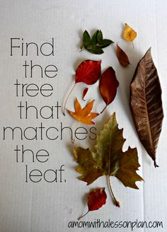 "Lovely autumn activity - find the tree that matches the leaf... From A Mom with a Lesson Plan ("",)"