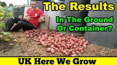 The Results Of The Potatoes Grown In the Ground Or Container Experiment https://www.youtube.com/watch?v=jzcIFmvbsDs #gardening #potato #allotment #containergrowing #growingincontainers #container #bucket #spud #grow #results #gardening