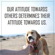 Our attitude towards others determines their attitude towards us. #attitude #kindness