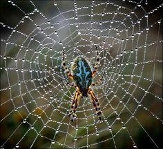39 Best Spider Web Spider Webs Images Spider Spider