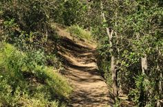 one of several nice hiking paths at the Conejo Botanical Gardens in Thousand Oaks, California.