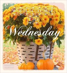 Welcome To Wednesday wednesday wednesday quotes wednesday blessings wednesday images wednesday quote images Wednesday Greetings, Happy Wednesday Quotes, Good Morning Wednesday, Wacky Wednesday, Wonderful Wednesday, Good Morning Greetings, Morning Wish, Wednesday Motivation, Sunday
