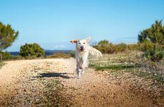 Comment protéger les coussinets ? - The Adventure Dogs
