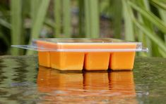 6pk 100hr LEMON VERBENA /& CITRONELLA Triple Scented Organic SOY WAX CLAM MELTS