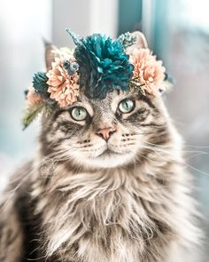 Cats, Dogs, Flowers: Unusual Photo Portraits of Beloved Pets - Seasons: Sommer: Summer - Katzen Kittens Cutest, Cats And Kittens, Cute Cats, Funny Cats, Pretty Cats, Beautiful Cats, Cute Baby Animals, Funny Animals, Animals Dog