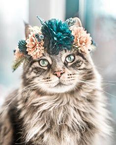 Cats, Dogs, Flowers: Unusual Photo Portraits of Beloved Pets - Seasons: Sommer: Summer - Katzen Kittens Cutest, Cats And Kittens, Cute Cats, Funny Cats, Funny Animals, Cute Animals, Wild Animals, Baby Animals, Pretty Cats