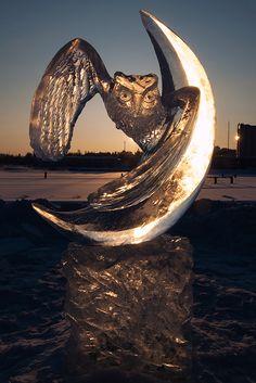 Ice Owl. Joensuu, Finland. (Ths Tarja)