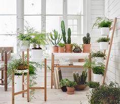Una habitación llena de plantas verdees en macetas y diferentes soportes para plantas en blanco y bambú.