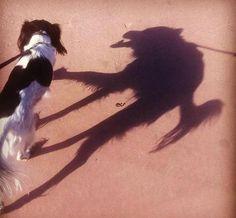 Hellhound   Shadows