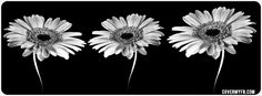 Black And White Flowers Facebook Cover Images