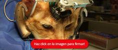 Terminemos con los experimentos con animales en España! FIRMA Y COMPARTE ESTA PETICIÓN AHORA!