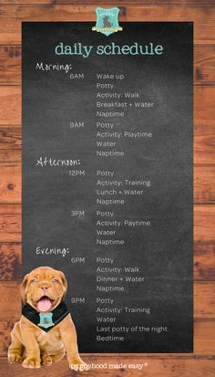 Create a Daily Schedule for Your Puppy! — The Puppy Academy Puppy Feeding Schedule, Puppy Schedule, New Puppy Checklist, Puppy Training Schedule, Training Your Puppy, Class Schedule, Puppies Tips, Dogs And Puppies, Puppy Training Classes