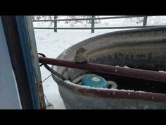 nice Awesome Moment a Man Rescues a Sparrow Frozen to a Fence Post Using the Warmth of his Breath