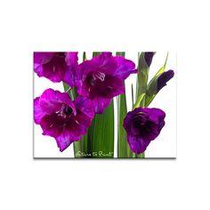 Aus Liebe zu Gladiolen