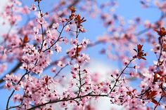 Title  Pink Spring Sky Dreams   Artist  Guido Montanes Castillo   Medium  Photograph