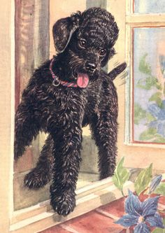 Poodle Charming Dog Greetings Note Card Beautiful Black Dog Stands In Window