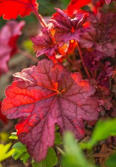 Nine to 12 months of attractive foliage should put heuchera at the top of your Midwest plant list. More info: http://www.midwestliving.com/garden/featured-gardens/garden-tour-three-part-harmony/?page=12