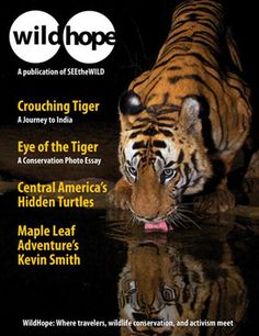 WildHope eMagazine Current Issue | SEEtheWILD: Read about a journey to India's national parks to see and learn about tigers, peruse a tiger conservation photo essay by award-winning photographer Steve Winter, follow a search for Central America's most endangered sea turtles & more! http://www.seethewild.org/2549/wildhope-magazine.html