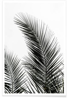 'Palm Leaves I' Graphic-Art-Print auf Leinwand Framed Art Prints, Painting Prints, Wall Art Prints, Reproductions Murales, Art Blanc, L Wallpaper, Bedroom Wallpaper, Image Deco, Black And White Prints