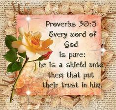Every word of God is pure:He is a shield unto them that put their trust in Him. proverbs 30:5