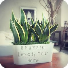 Tired of breathing toxic pollution in your home and office? Heres how to detoxify and freshen the air, au natural, thanks to your friendly houseplants!