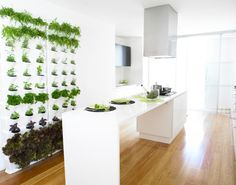 pflanzen in der kuche tipps rund pflege, 99 besten küche design bilder auf pinterest | küche und esszimmer, Design ideen