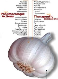 Garlic for Cancer - Numerous studies have indicated that garlic has some anti-cancer properties